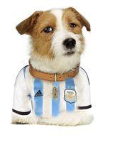 Sparky Argentina.jpg