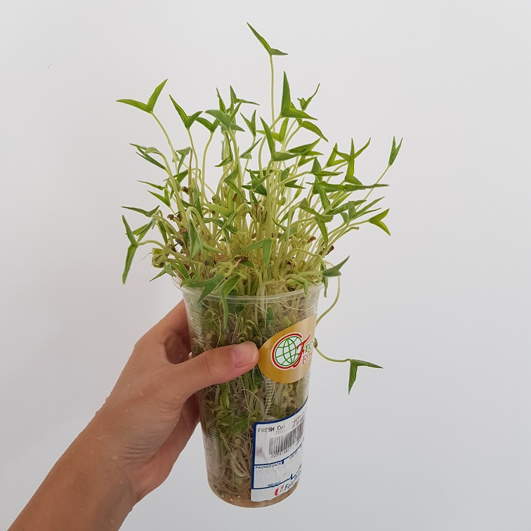 Battling Pandemic Fatigue Idea #4: Grow Something Edible!